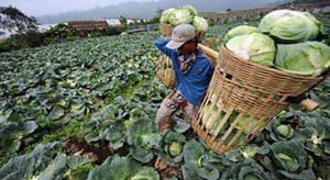 Dampak Covid-19 terhadap Perekonomian Petani di Wonosobo